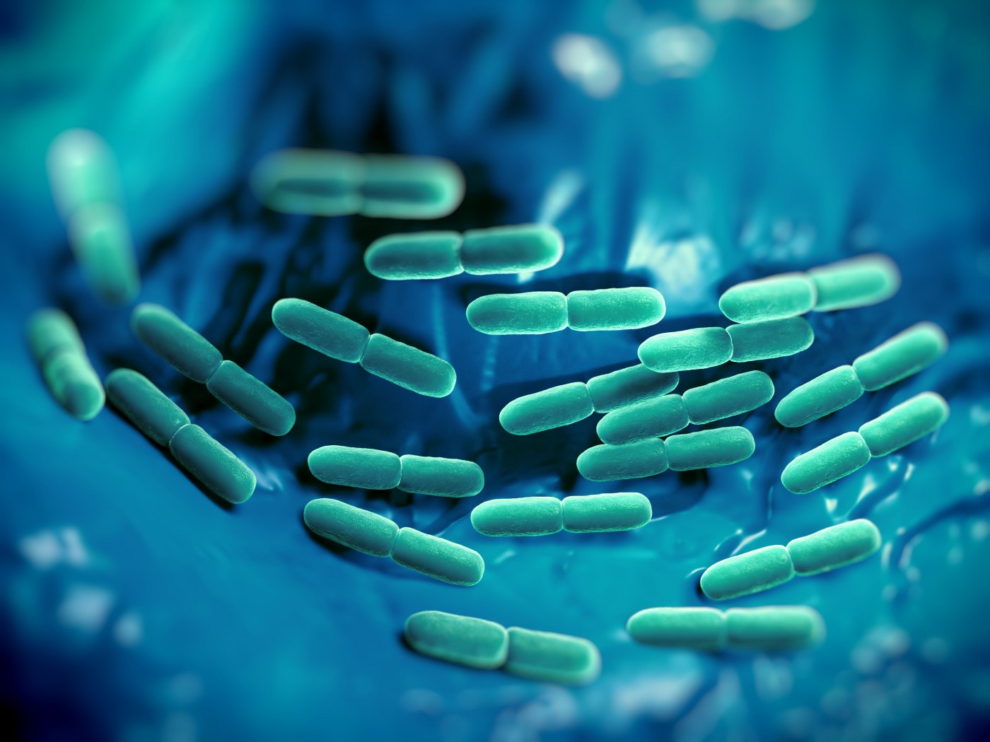 Probiotics Improve Behavioral Symptoms of Chronic Inflammatory Conditions, Including RA